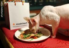 dokumentacja medyczna medchart kot prof lampe chirurg